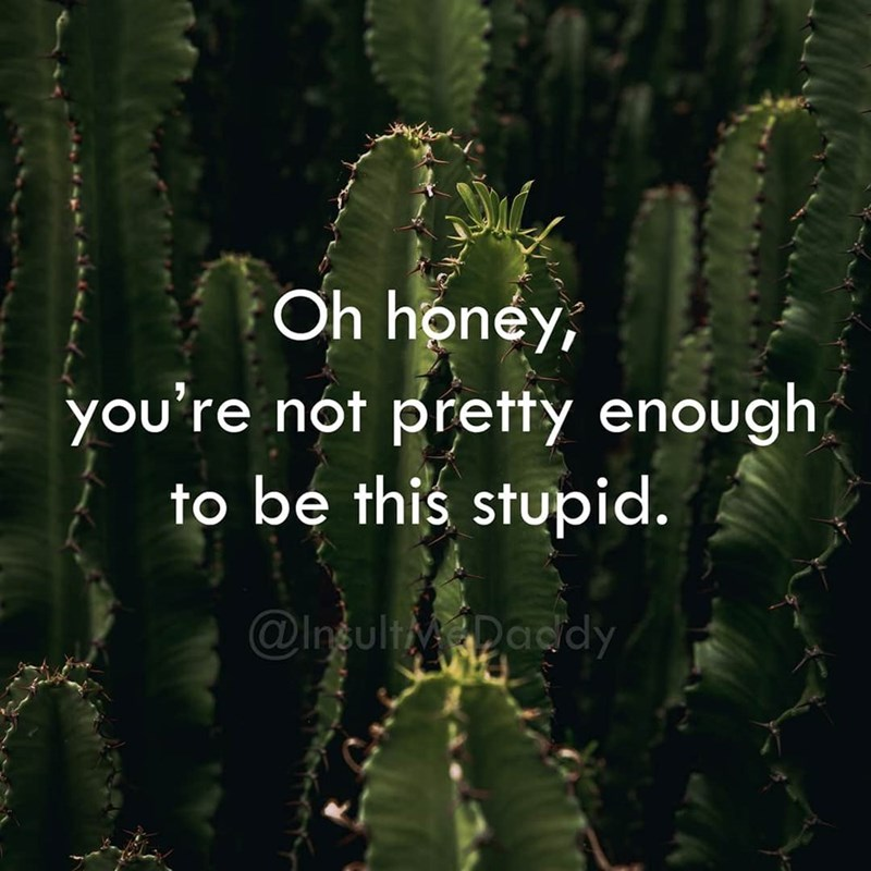Cactus - Oh honey, you're not pretty enough to be this stupid. @InsultyDacdy