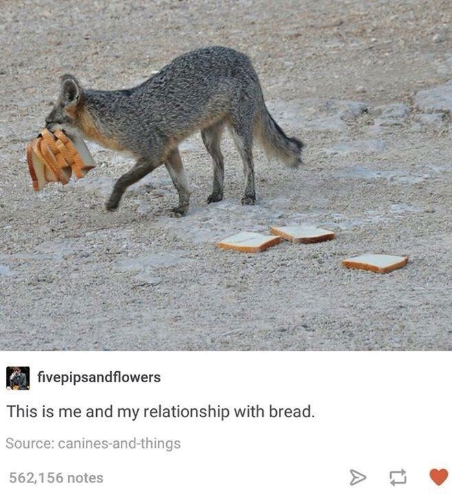 bread meme about coyote dragging slices from a loaf