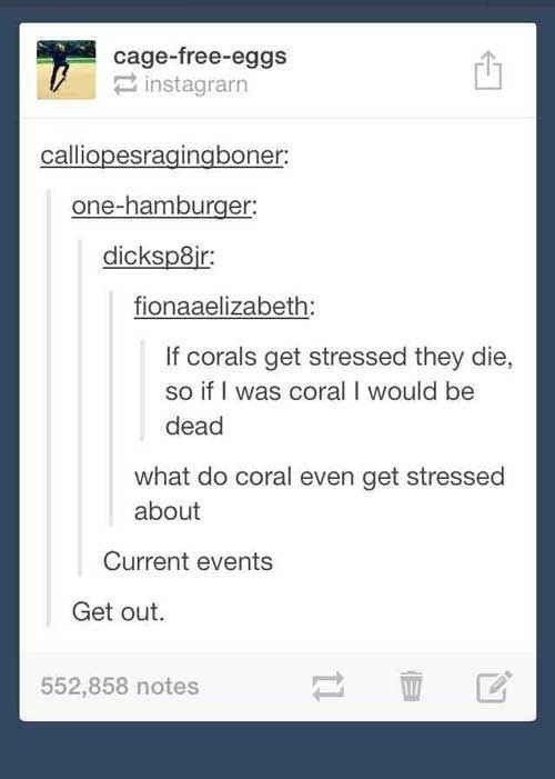 Text - cage-free-eggs instagrarn calliopesragingboner one-hamburger: dicksp8ir fionaaelizabeth: If corals get stressed they die, so if I was coral I would be dead what do coral even get stressed about Current events Get out 552,858 notes
