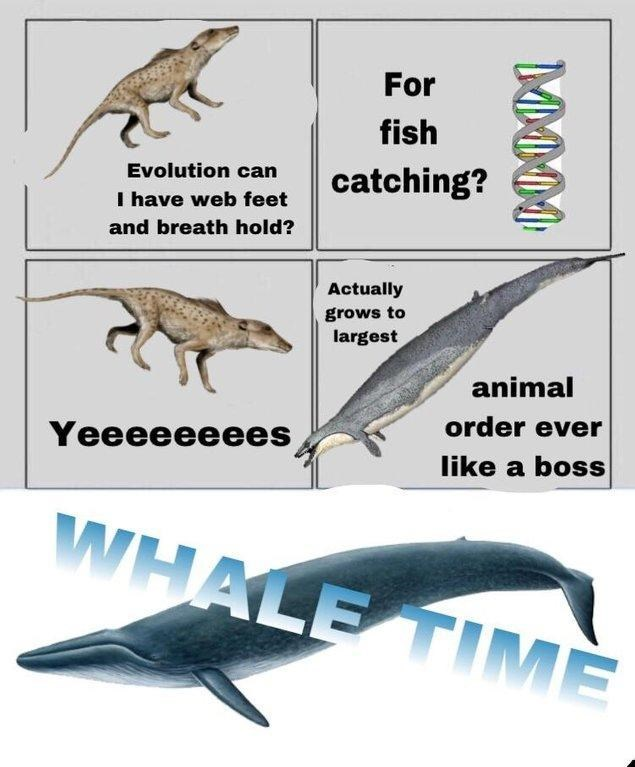 "Prehistoric animal says, ""Evolution can I have web feet and breath hold?"" DNA strand replies, ""For fish catching?"" Prehistoric animal ""Actually grows to largest animal order ever like a boss"" followed by ""whale time"""