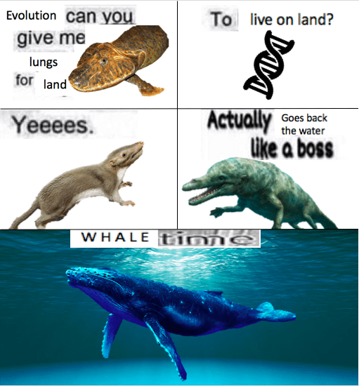 evolution meme - Organism - Evolution can you To live on land? give me lungs for land Actually like a boss Goes back the water Yeeees. WHALE nne