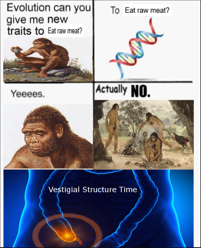 evolution meme