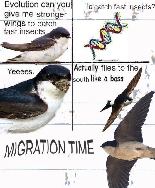 evolution meme - Bird - Evolution can you give me stronger wings to catch fast insects To catch fast insects? Actually flies to the south like a boss Yeeees. MIGRATION TIME