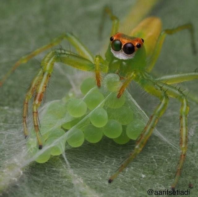 Insect - @aarifsetiadi
