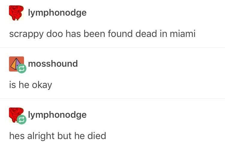 funny tumblr post scrappy doo has been found dead in miami mosshound is he okay lymphonodge hes alright but he died