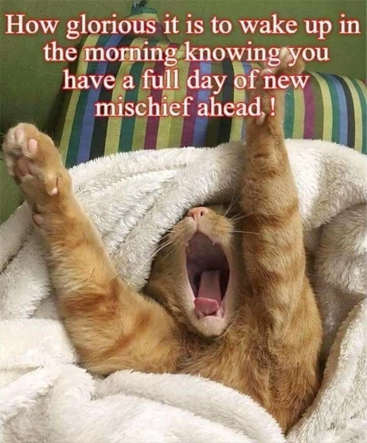 caturday - Facial expression - How glorious it is to wake up in the morning knowing you have a full day of new mischief ahead,!