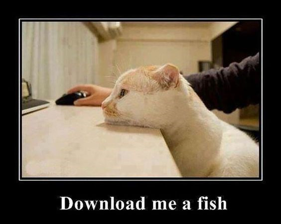 caturday - Photo caption - Download me a fish
