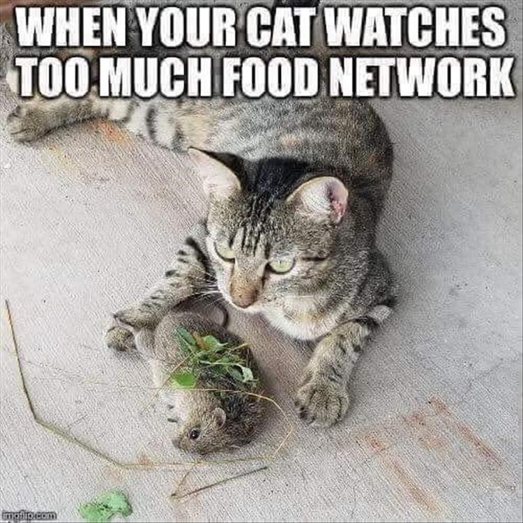 caturday - Cat - WHEN YOUR CAT WATCHES TOO MUCH FOOD NETWORK mglip.com