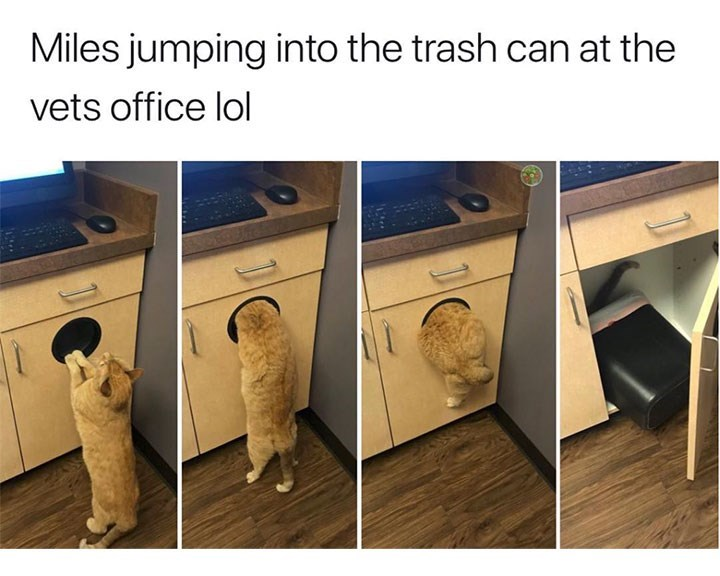 caturday - Product - Miles jumping into the trash can at the vets office lol