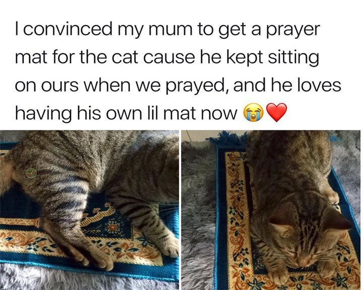 caturday - Cat - I convinced my mum to get a prayer mat for the cat cause he kept sitting on ours when we prayed, and he loves having his own lil mat now