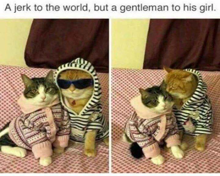 caturday - Glasses - A jerk to the world, but a gentleman to his girl.