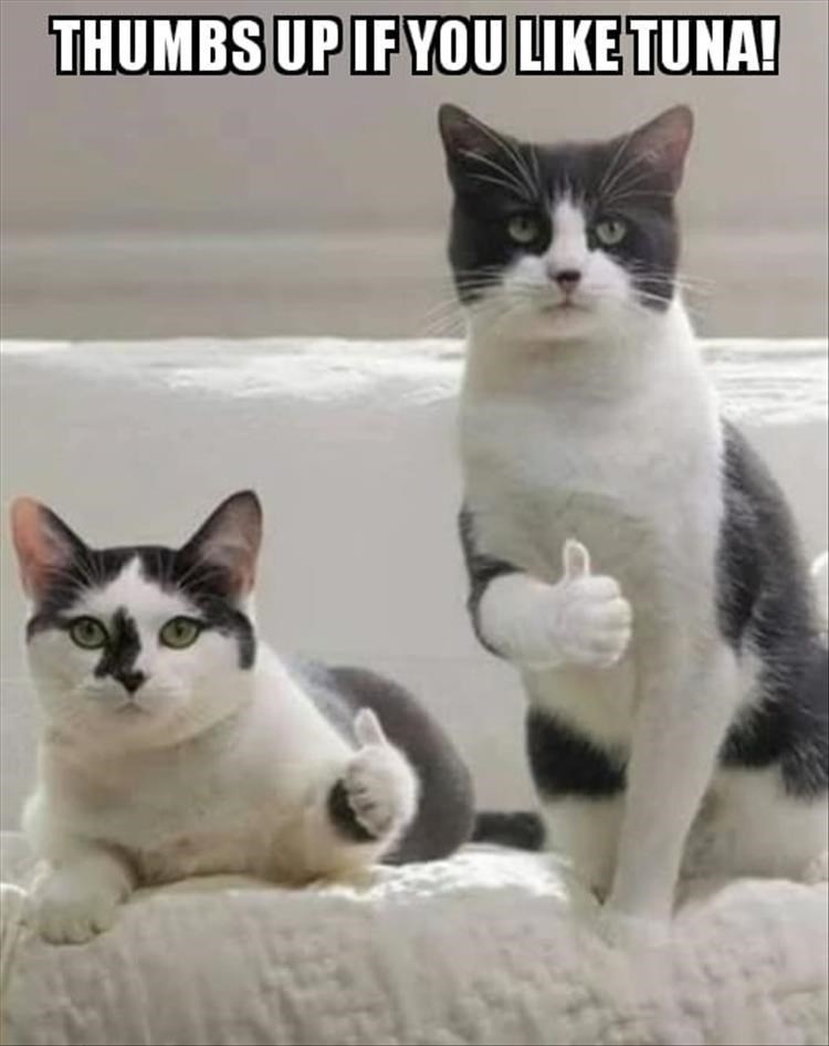 caturday - Cat - THUMBS UP IF YOULIKE TUNA!