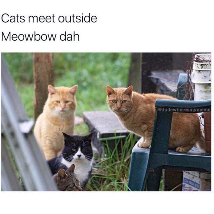 caturday - Cat - Cats meet outside Meowbow dah dudewheresmymeme