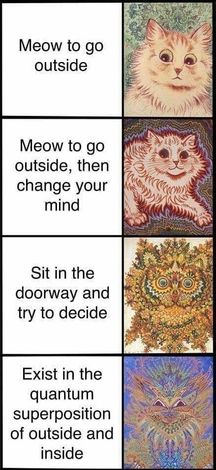 caturday - Text - Meow to go outside Meow to go outside, then change your mind Sit in the doorway and try to decide Exist in the quantum superposition of outside and inside ww