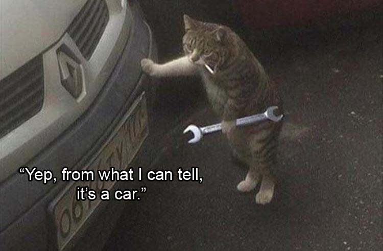 "caturday - Cat - Yep, from what I can tell, it's a car."" 11"