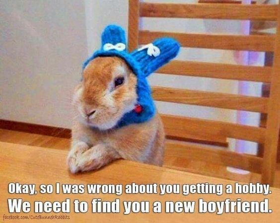 Domestic rabbit - Okay, so I was wrong about you getting a hobby. We need to find you a new boyfriend. facebook.com/CuteBnnehRabbits