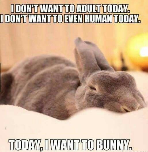 Rabbit - IDON'TWANT TO ADULT TODAY IDONT WANT TO EVEN HUMAN TODAY TODAY, I WANT TO BUNNY