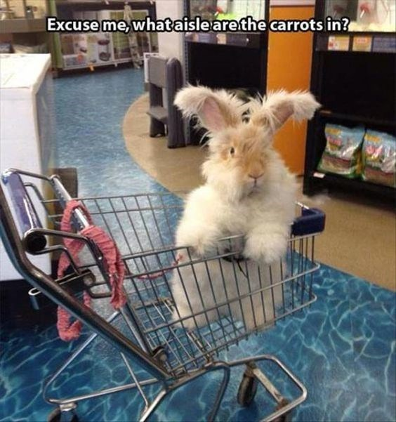 Canidae - Excuse me what aislearethe carrots in?