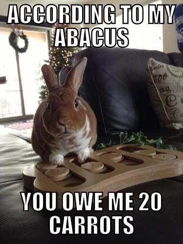 Rabbit - ACCORDING TO MY TABACUS C YOU OWE ME 20 CARROTS