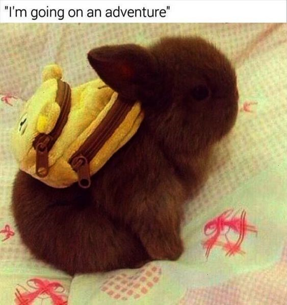 "Rabbit - ""I'm going on an adventure"""