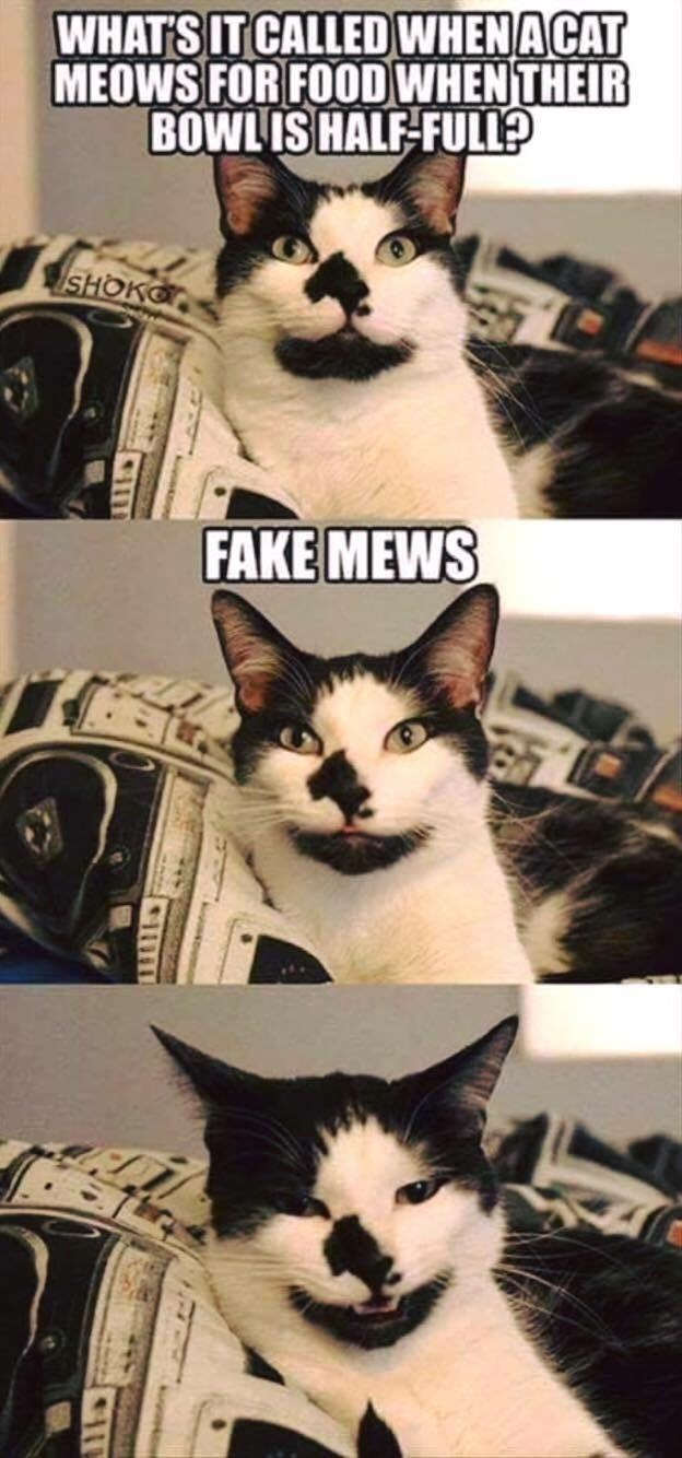 Cat - WHAT'S IT CALLED WHENACAT MEOWS FOR FOODWHENTHEIR BOWLIS HALF-FULL SHOKO FAKE MEWS