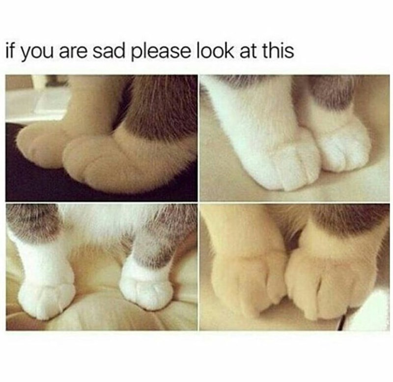 picture of soft cat paws