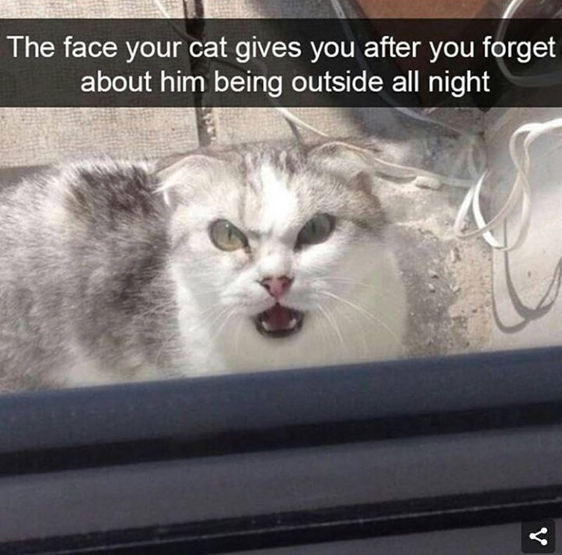 "Snapchat text overlay that reads, ""The face your cat gives you after you forget about him being outside all night"" over a pic of an angry-looking cat on the other side of the door"