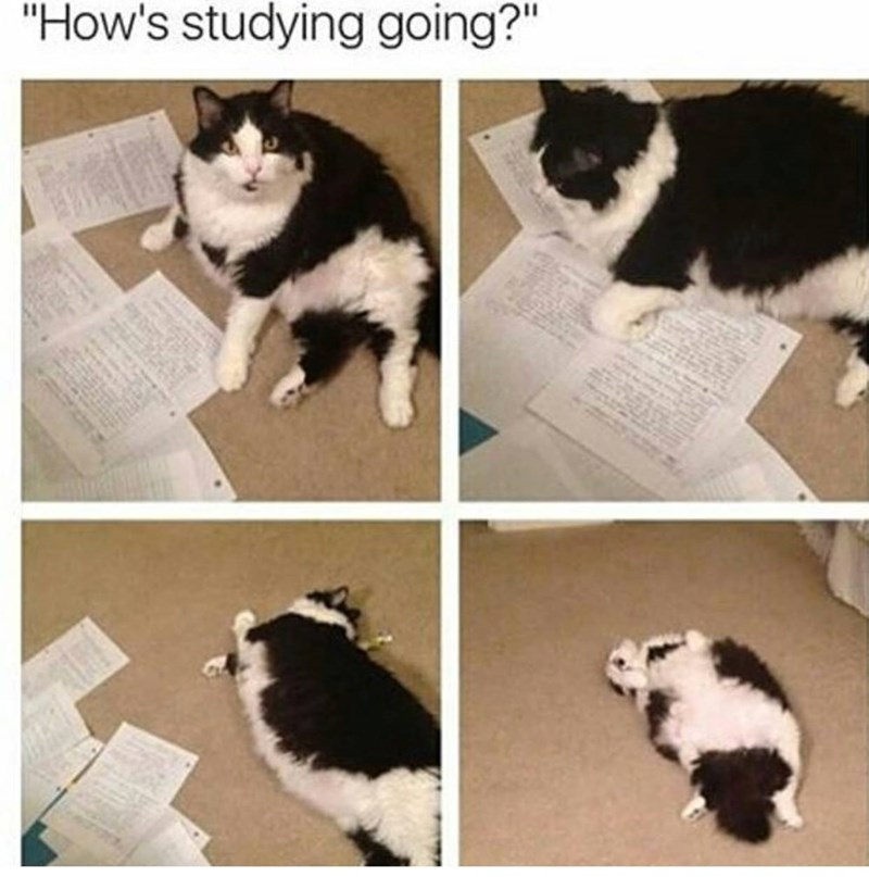 picture of cat rolling on the floor between papers as a representation of studying