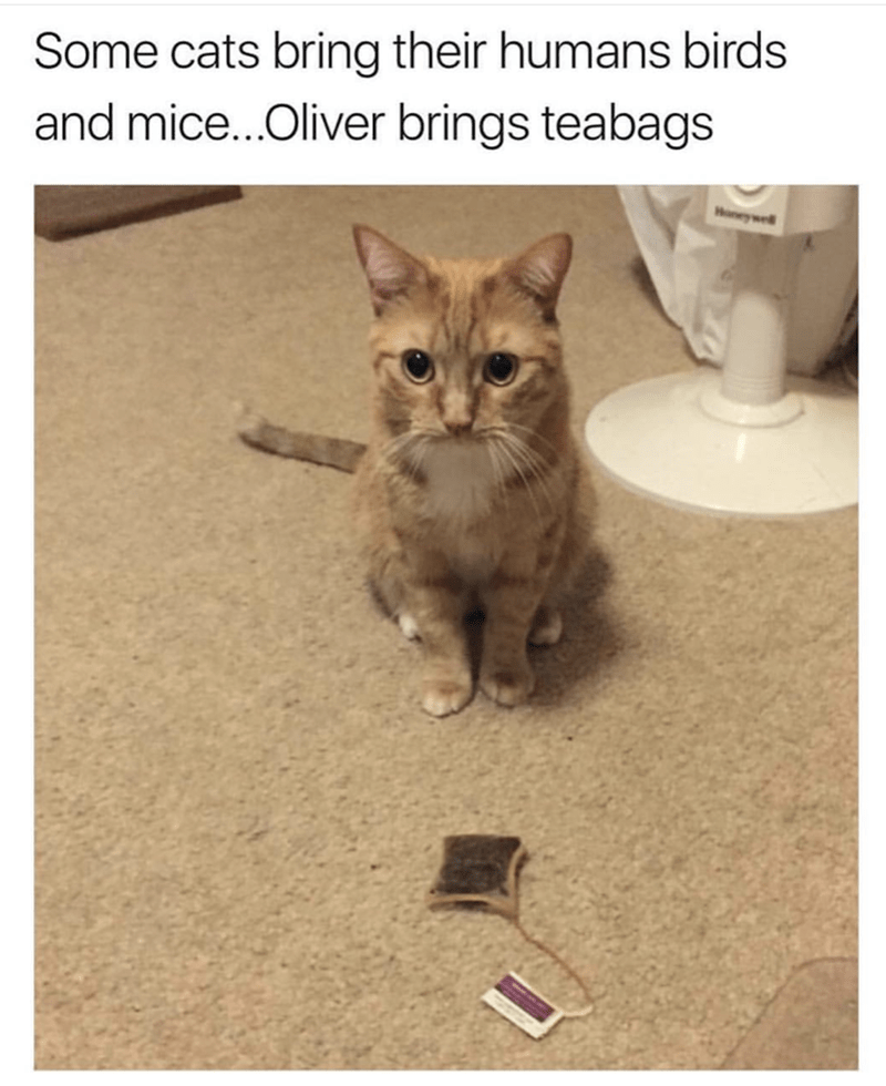 picture of cat that brings his human teabags as gifts