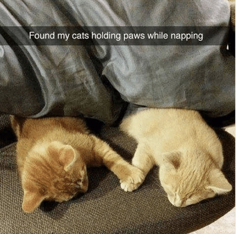 cute snapchat of cats holding paws in their sleep