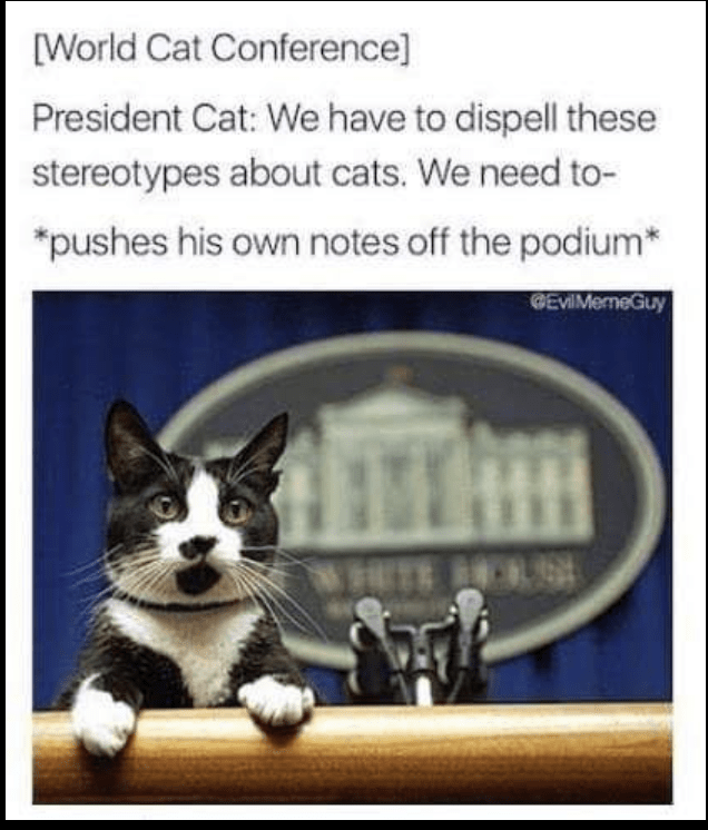 "Caption that reads, ""[World Cat Conference] President Cat: We have to dispel these stereotypes about cats. We need to...*Pushes his own notes off podium"" above a pic of a cat at a podium"
