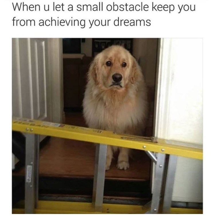 "Caption that reads, ""When you let a small obstacle keep you from achieving your dreams"" above a pic of a sad-looking dog behind a ladder"