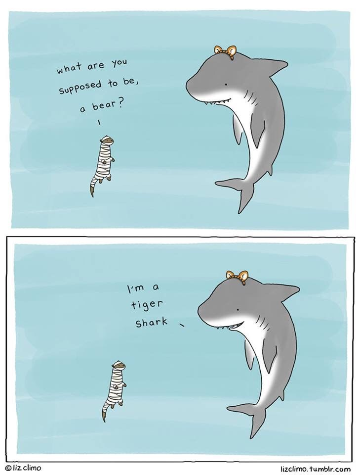 Bottlenose dolphin - what are You Supposed to be, bear? Im a tiger Shark liz climo lizclimo. tumblr.com