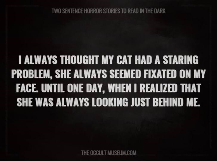 Text - TWO SENTENCE HORROR STORIES TO READ IN THE DARK T ALWAYS THOUGHT MY CAT HAD A STARING PROBLEM, SHE ALWAYS SEEMED FIXATED ON MY FACE. UNTIL ONE DAY, WHEN I REALIZED THAT SHE WAS ALWAYS LOOKING JUST BEHIND ME. THE OCCULT MUSEUM.COM