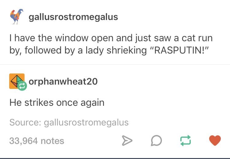 "meme - Text - gallusrostromegalus I have the window open and just saw a cat run by, followed by a lady shrieking ""RASPUTIN!"" orphanwheat20 He strikes once again Source: gallusrostromegalus 33,964 notes"