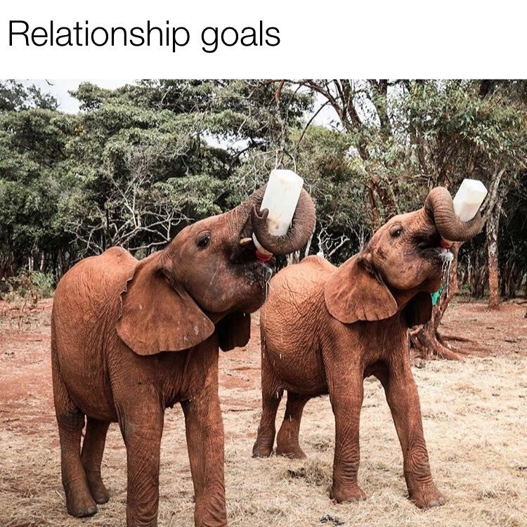meme - Elephant - Relationship goals