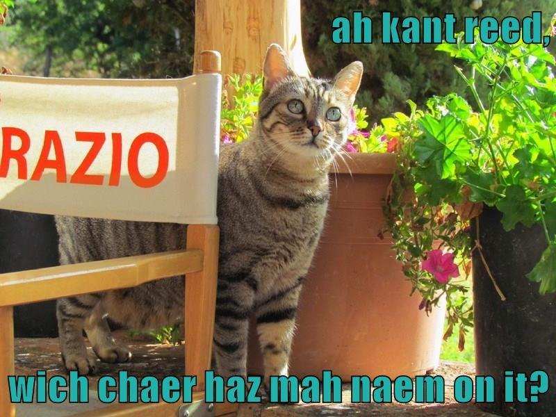 Cheezburger Image 9227805696