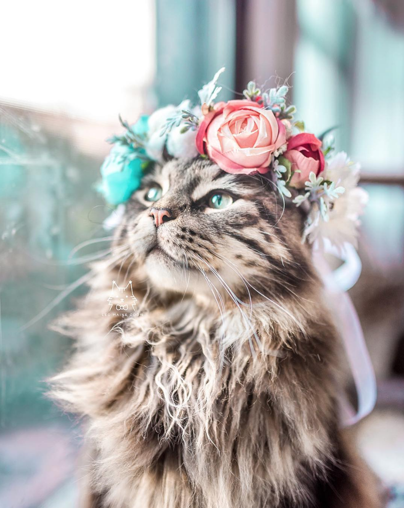 maine coon instagram flower crown beautiful - 9227855104