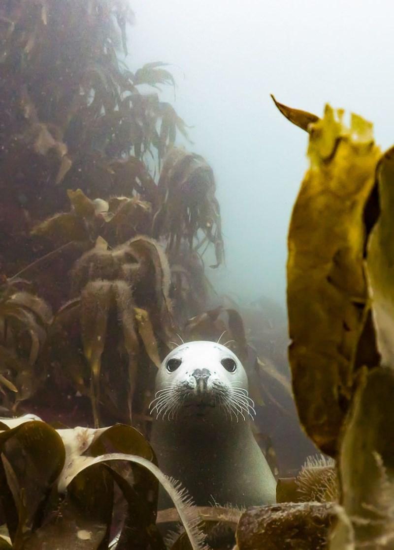 underwater photography contest - Organism