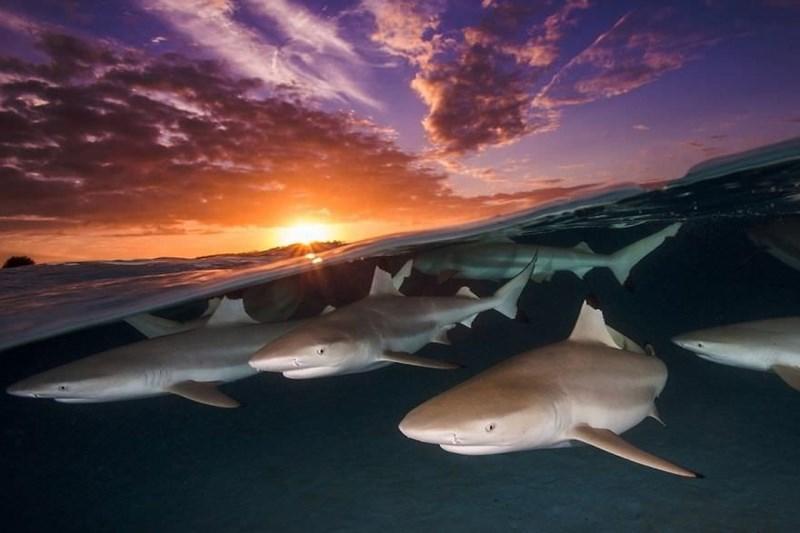 underwater photography contest - Sky