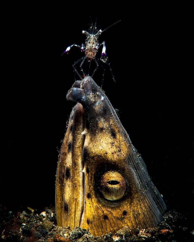 underwater photography contest - Moth