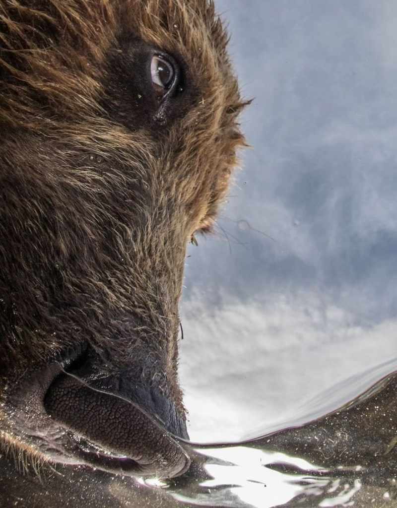 underwater photography contest - Boar