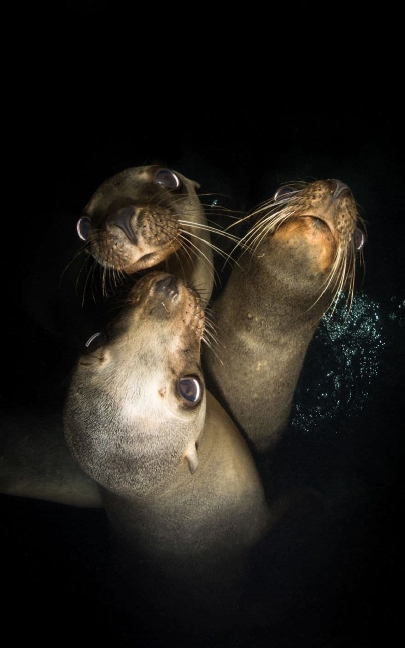 underwater photography contest - Seal
