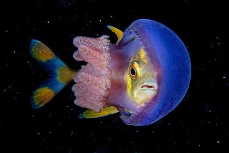 underwater photography contest - Fish
