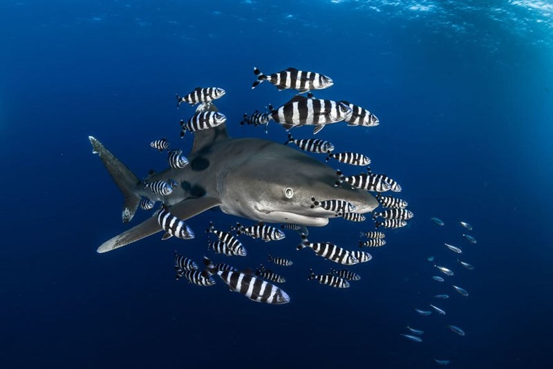 underwater photography contest - Fish - ,)) }