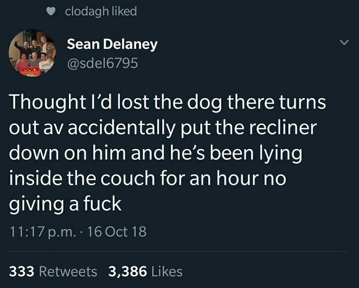 Text - clodagh liked Sean Delaney @sdel6795 Thought I'd lost the dog there turns out av accidentally put the recliner down on him and he's been lying inside the couch for an hour no giving a fuck 11:17 p.m. 16 Oct 18 333 Retweets 3,386 Likes