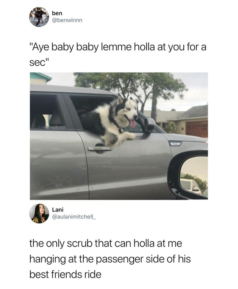 tweet post of a dog hanging outside the passengers side of the car