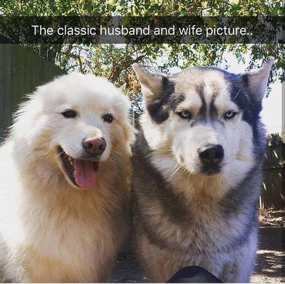 Dog - The classic husband and wife picture.
