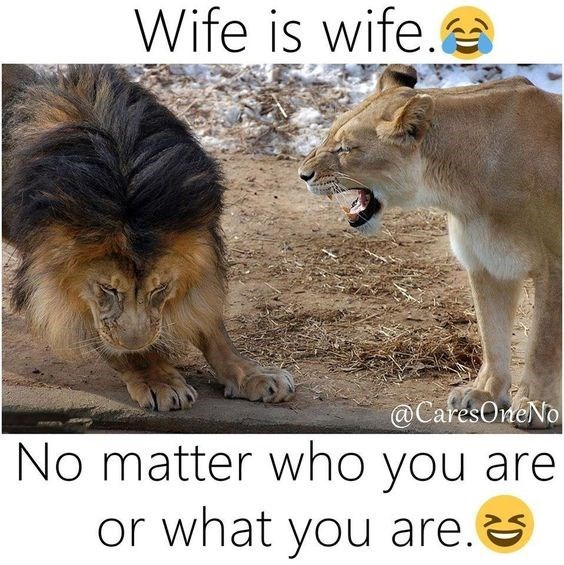 Wildlife - Wife is wife. @CaresOneNo No matter who you are or what you are.