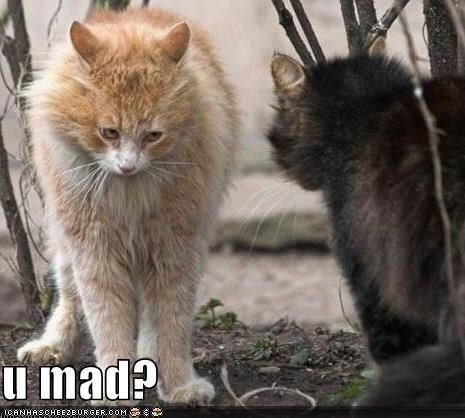 Cat - l mad? ANHAS CHEE2BURGER OOM